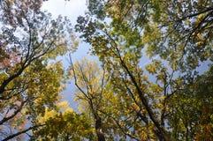Hemel door treetops royalty-vrije stock afbeelding