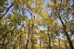 Hemel door treetops stock afbeelding