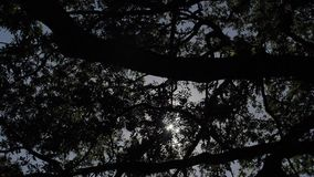 Hemel en Bomen stock video