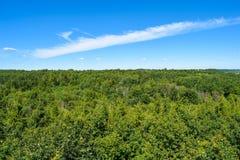 Hemel en bomen Litouwen Stock Afbeeldingen