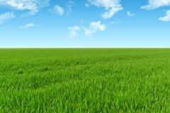 Hemel en grasachtergrond stock afbeelding