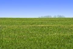 Hemel en groen graslandschap stock fotografie
