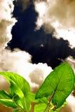 Hemel en groen Verlof Royalty-vrije Stock Foto's