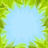 Hemel en groene bladeren Royalty-vrije Stock Foto's