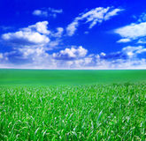 Hemel en tarwe stock foto