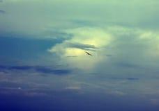 Hemel en vogel Stock Fotografie