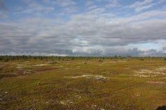 Hemel met wolken die over het bosmoeras overhangen stock fotografie