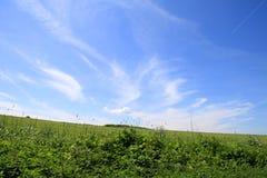 Hemel met wolken en gras Stock Foto's
