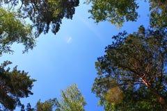Hemel onder de bomen in het bos royalty-vrije stock foto's