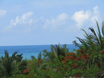 Hemel, overzees, wolken en palmen Royalty-vrije Stock Foto's