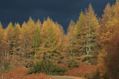 Hemel van de Bomen van de herfst de Stormachtige Grijze Royalty-vrije Stock Foto
