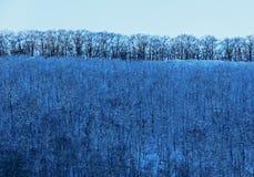 Hemel van de winter de Blauwe Bomen Stock Fotografie
