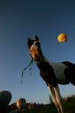 Hemelballon en paard Stock Afbeeldingen
