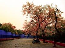 Hemelboom royalty-vrije stock afbeelding