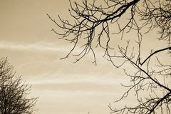 Hemelbrunch Stock Afbeelding