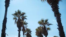 Hemelmening over palmen in toevlucht stock videobeelden