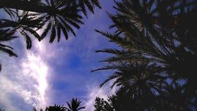 Hemelmening van palmen tijd-tijdspanne stock videobeelden