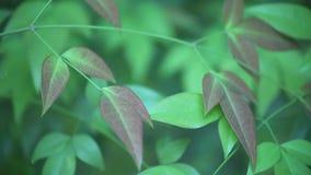 Hemels bamboe stock video