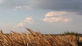 Hemels landschap - mooie wolken over het gebied stock footage