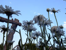 Hemelse bloem Stock Foto