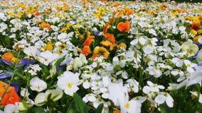 Hemelse bloemendouche stock fotografie