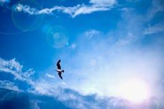Hemelse heldere blauwe hemel met zonstralen en vogel Royalty-vrije Stock Afbeelding