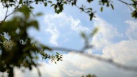Hemelwolken achter brenches en bladeren stock video