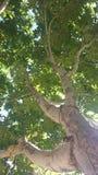 Hemelwortels Royalty-vrije Stock Foto