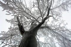 Hemelzonneschijn door de takken van de de winterboom (van onderaan). Royalty-vrije Stock Foto