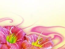 Hemerocallis Lizenzfreies Stockfoto
