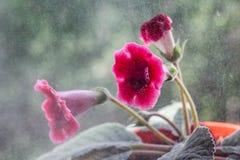 Hemfärger Royaltyfria Foton