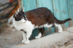 Hemhjälp cat arkivfoton