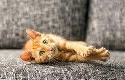 Hemhjälp cat Arkivfoto