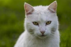 Hemhjälp cat Royaltyfri Bild