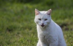 Hemhjälp cat Royaltyfria Foton