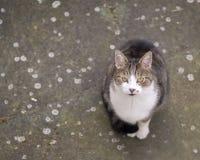 Hemhjälp cat Fotografering för Bildbyråer