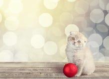 Hemhjälp cat Royaltyfri Fotografi