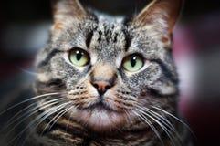 Hemhjälp cat Arkivbilder