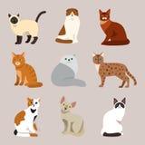 Hemhjälp för djur för tecknad film för gullig älsklings- stående för kattavel fluffig ung förtjusande katt- och för sammanträdedä Fotografering för Bildbyråer
