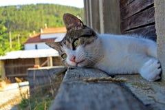 Hemhjälp cat Royaltyfri Foto