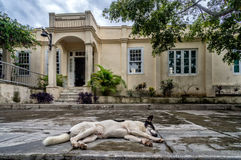 Hemingsways house in san Francisca, cuba Royalty Free Stock Photo