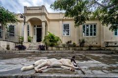 Hemingsways house in san Francisca, cuba Royalty Free Stock Photo