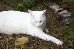 Hemingway cat Stock Photo