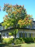 Hemingway-Haus Key West Lizenzfreies Stockbild
