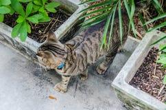 Hemingway`s Six-Toed Cat - Key West, Florida Royalty Free Stock Photo