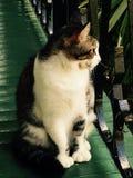 Hemingways'cat royalty-vrije stock foto's