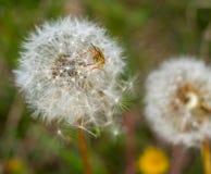 Hemiptera Stock Photography