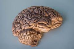 Hemisfério do cérebro, em 3D imagens de stock royalty free