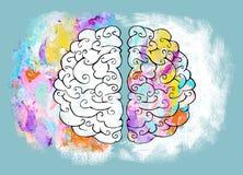 Hemisferio correcto e izquierdo del cerebro humano ilustración del vector