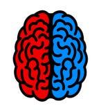Hemisferio izquierdo y derecho del cerebro libre illustration